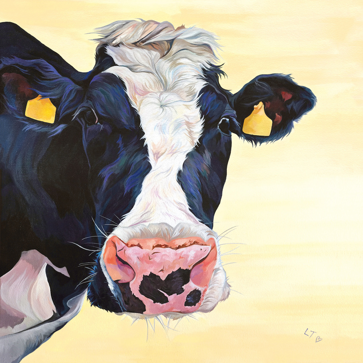 Picture of a Holstein Cow Face
