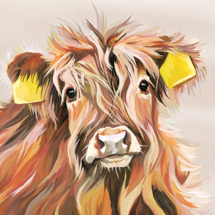 Personalised highland calf print by Lauren's Cows