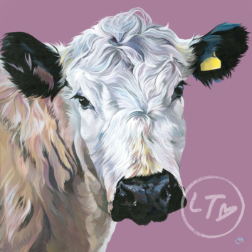British White Cow Painting 'Hermione'