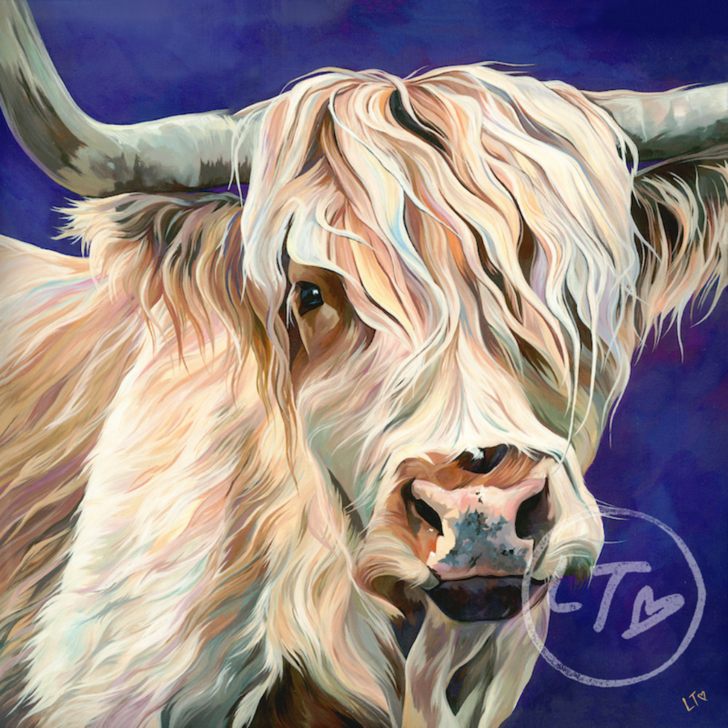 Ronnie, white Highland Cow art by UK artist