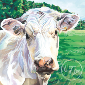 Charolais Cattle painting by Lauren Terry