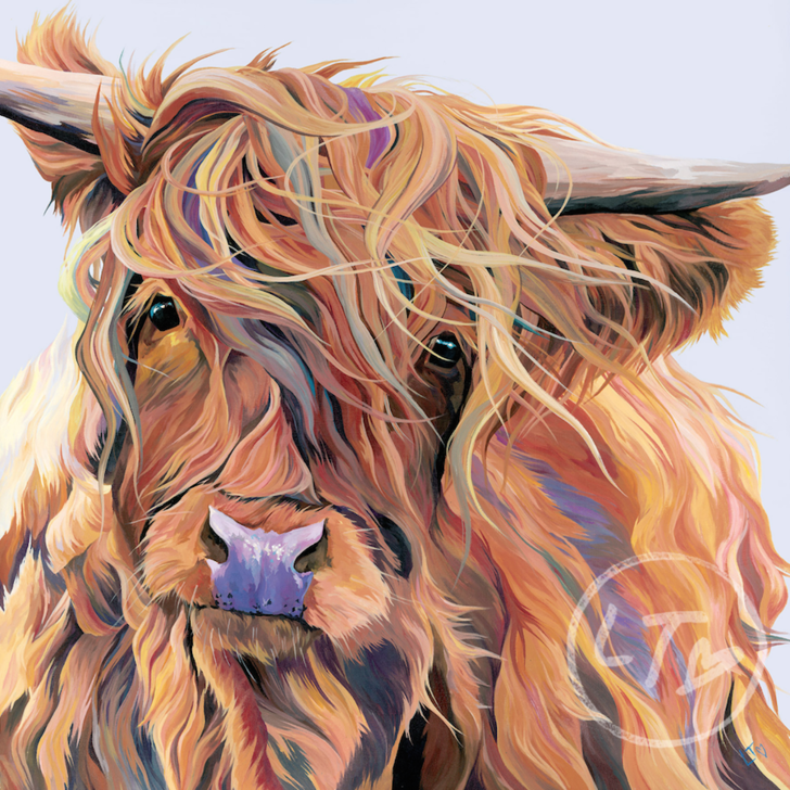 Scarlett, a beautiful Highland Cow caught in the wind!
