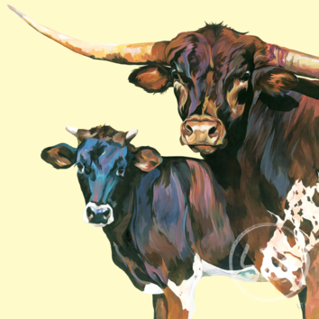 A stunning Texas Longhorn Bull and Steer
