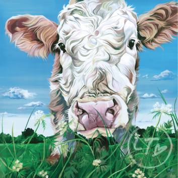 Portrait of a curious simmental cow by Lauren Terry
