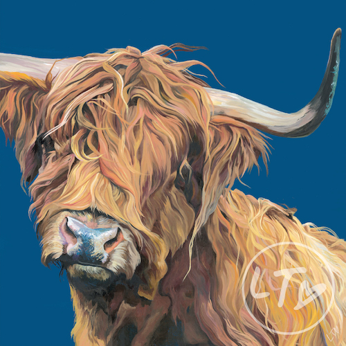 Alfie, a cheeky tousled highland calf on pastel blue background