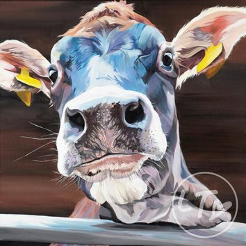 A charismatic jersey Cow with vibrant blues in her coat