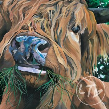 Giclee print of a Highland Cow eating
