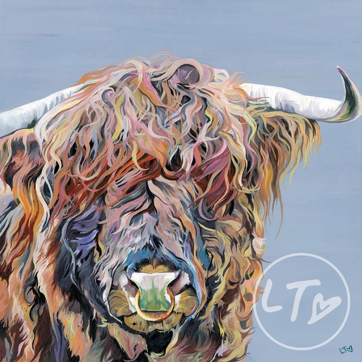 Axel Junior, a Highland Bull with nose ring and lots of attitude.
