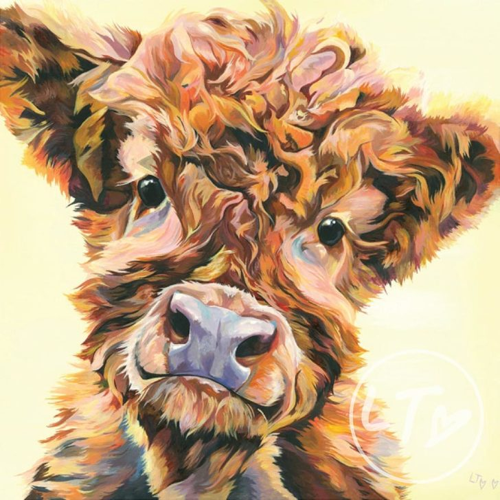 Ted highland calf art print wit yellow background