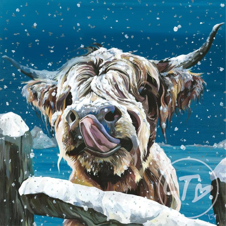 Snowdrift, a Highland cow licking snow off his nose.