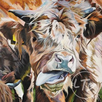 A painting of a cheeky highland calf sticking her tongue out