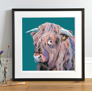 Archie the Highland Bull as seen on Countryfile