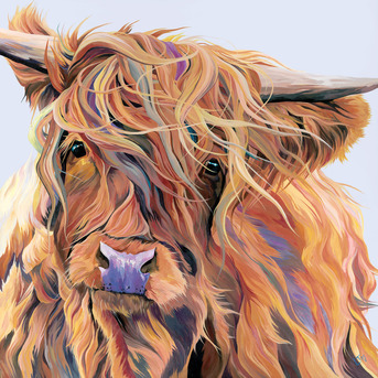 A colourful painting of a Highland Cow caught in the wind