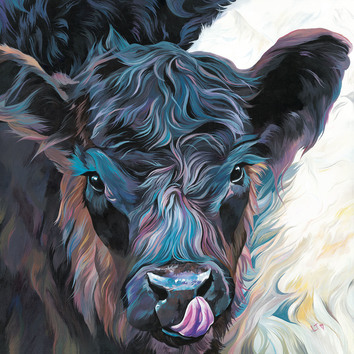 Belted Galloway calf by Lauren's Cows