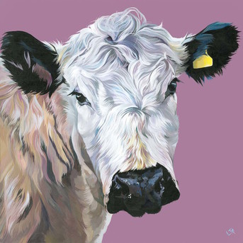 Painting of a British White cow by UK artist Lauren Terry
