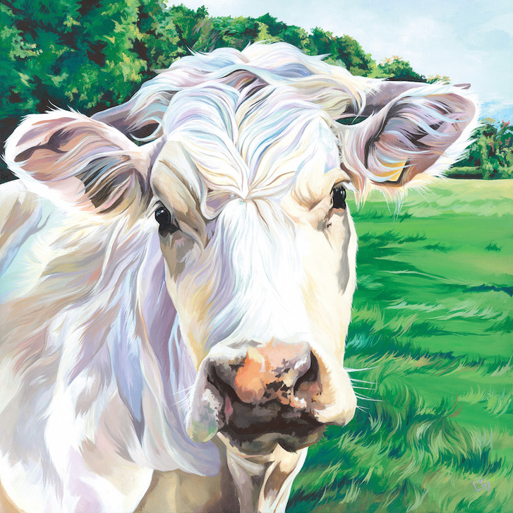 Ivory, limited edition Charolais cow print by Lauren's Cows