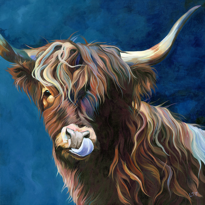 Original Painting of a Highland Cow licking her nose.