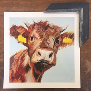 Highland Calf print in Blue Frame