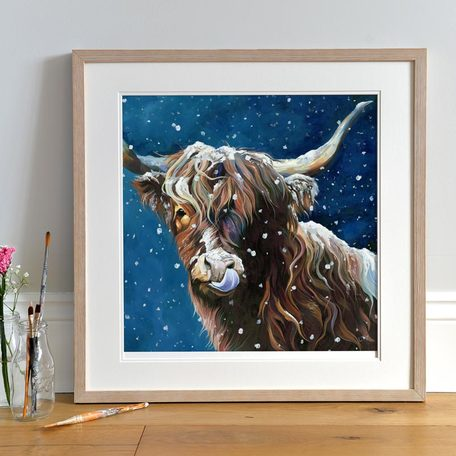 'Snowflake' Highland Cow Licking Snow from her nose