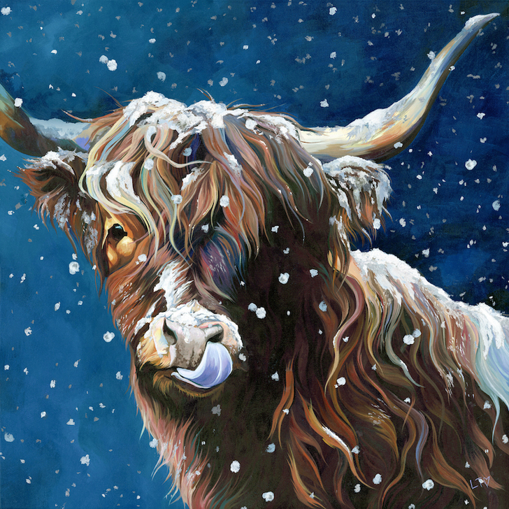 Snowflake, a snow covered Highland Cow licking her nose!